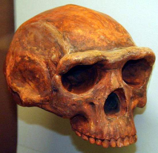 Early Humans Lived in China 1.7 Million Years Ago