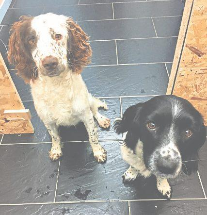 Tig, left, and Jess were taken from the kennels where they were staying. Only Jess has been recovered by police