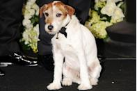 "<p>Uggie from <em><a href=""https://www.amazon.com/dp/B0082EOJYE?ref=sr_1_1_acs_kn_imdb_pa_dp&qid=1547580559&sr=1-1-acs&autoplay=0&tag=syn-yahoo-20&ascsubtag=%5Bartid%7C10055.g.5132%5Bsrc%7Cyahoo-us"" rel=""nofollow noopener"" target=""_blank"" data-ylk=""slk:The Artist"" class=""link rapid-noclick-resp"">The Artist</a></em> had his star moment on the red carpet and in the press room. The film won five awards, including Best Picture.</p>"