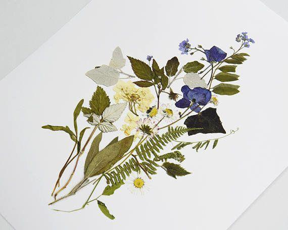 """Get a set of 2 prints from <a href=""""https://www.etsy.com/listing/489040428/botanical-print-set-pressed-flower-art?ga_order=most_relevant&ga_search_type=all&ga_view_type=gallery&ga_search_query=herbariums&ref=sc_gallery-1-4&plkey=d4eadfe68915af45d863a1220bda891412064622:489040428"""" target=""""_blank"""">Floral College on Etsy, starting at $60+</a>."""