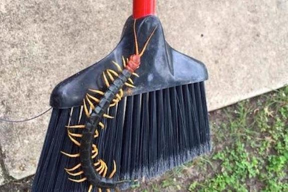 This image of a giant centipede is bound to give many people nightmares.