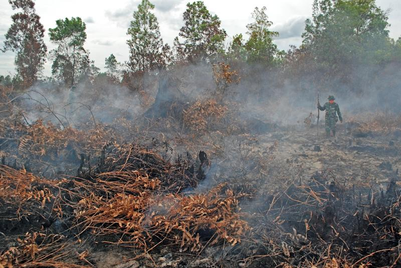 A soldier inspects a peatland forest on fire in Kampar district, Riau province, on Indonesia's Sumatra island, on August 7, 2015 (AFP Photo/Alfachrozie)