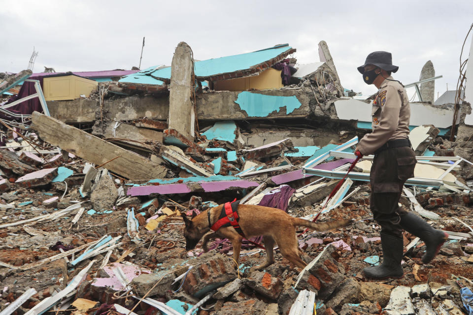 <p>A police officer leads a sniffer dog during a search for victims at the ruin of a building flattened by an earthquake in Mamuju, Indonesia,</p> (AP)