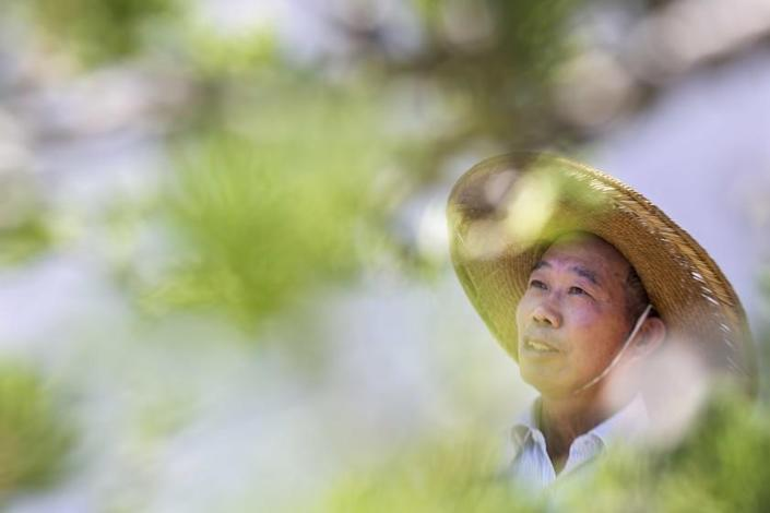 "The Huntington's resident penjing artist, Che Zhao Sheng, in the newly expanded Chinese Garden at the Huntington Library, Art Museum, and Botanical Gardens in San Marino. <span class=""copyright"">(Josie Norris / Los Angeles Times)</span>"