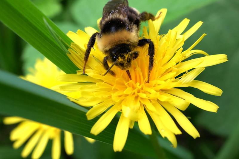 Total ban: The UK is backing a ban on bee-harming pesticides: AFP/Getty Images