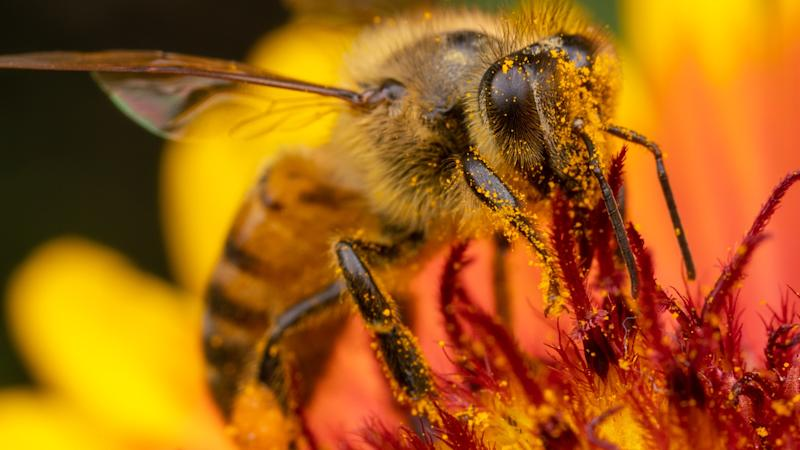 Glyphosate weed killers could be harming bees, warn scientists