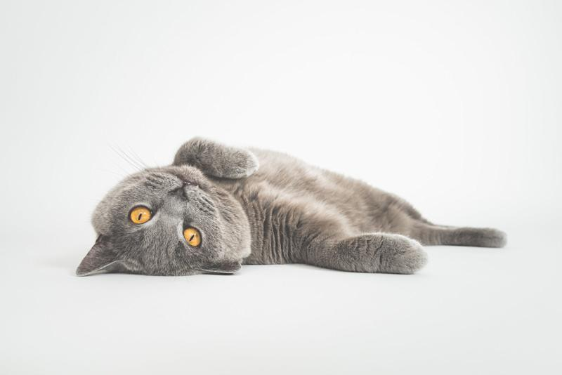 New York Poised to Become the First State to Ban Cat Declawing