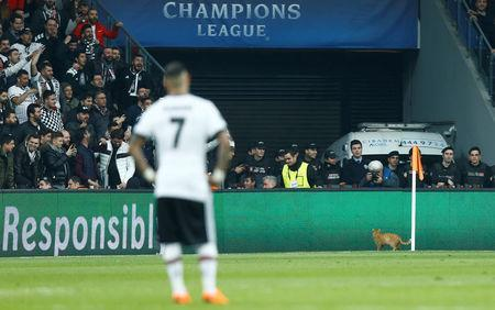 Soccer Football - Champions League Round of 16 Second Leg - Besiktas vs Bayern Munich - Vodafone Arena, Istanbul, Turkey - March 14, 2018 Besiktas fans look on as a cat runs onto the pitch during the match REUTERS/Osman Orsal