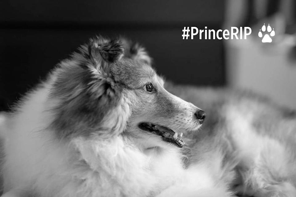 Prince, a seven-year-old Shetland sheepdog, was left with Platinium Dogs Club at a semi-detached residential property on Galistan Avenue on 16 December, 2017. (PHOTO: Elaine Mao/Facebook)