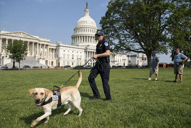 <p>A Capitol Police Officer and police dog patrol around the US Capitol in Washington, DC, June 14, 2017, as security is increased following a shooting incident targeting Congressmen in nearby Va. (Photo: Saul Loeb/AFP/Getty Images) </p>