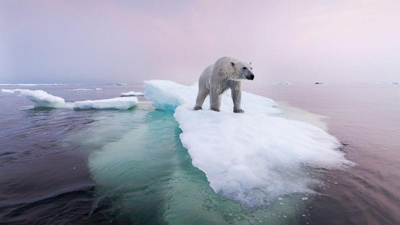 Researchers: Greenhouse Emissions Are Endangering our Polar Bears