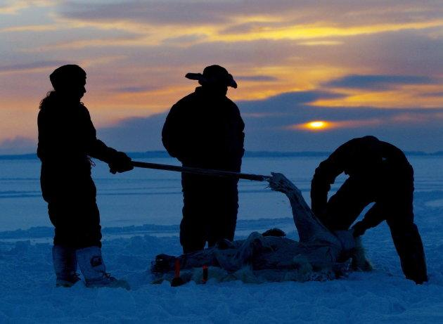 Inuit hunters, left to right, Meeka Mike, Lew Philip and Joshua Kango skin a polar bear on the ice as the sun sets during the traditional hunt on Frobisher Bay near Tonglait, Nunavut on Feb. 2, 2003.