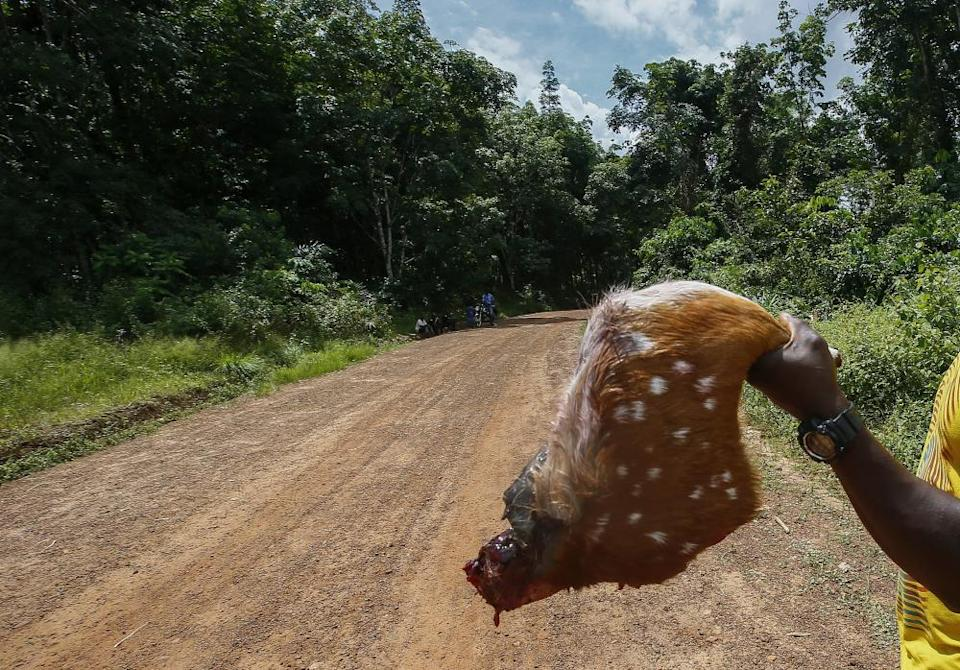 A Liberian hunter holds up the leg of a Red Deer to sell as bushmeat on a roadside in Grand Bassa county, Liberia.