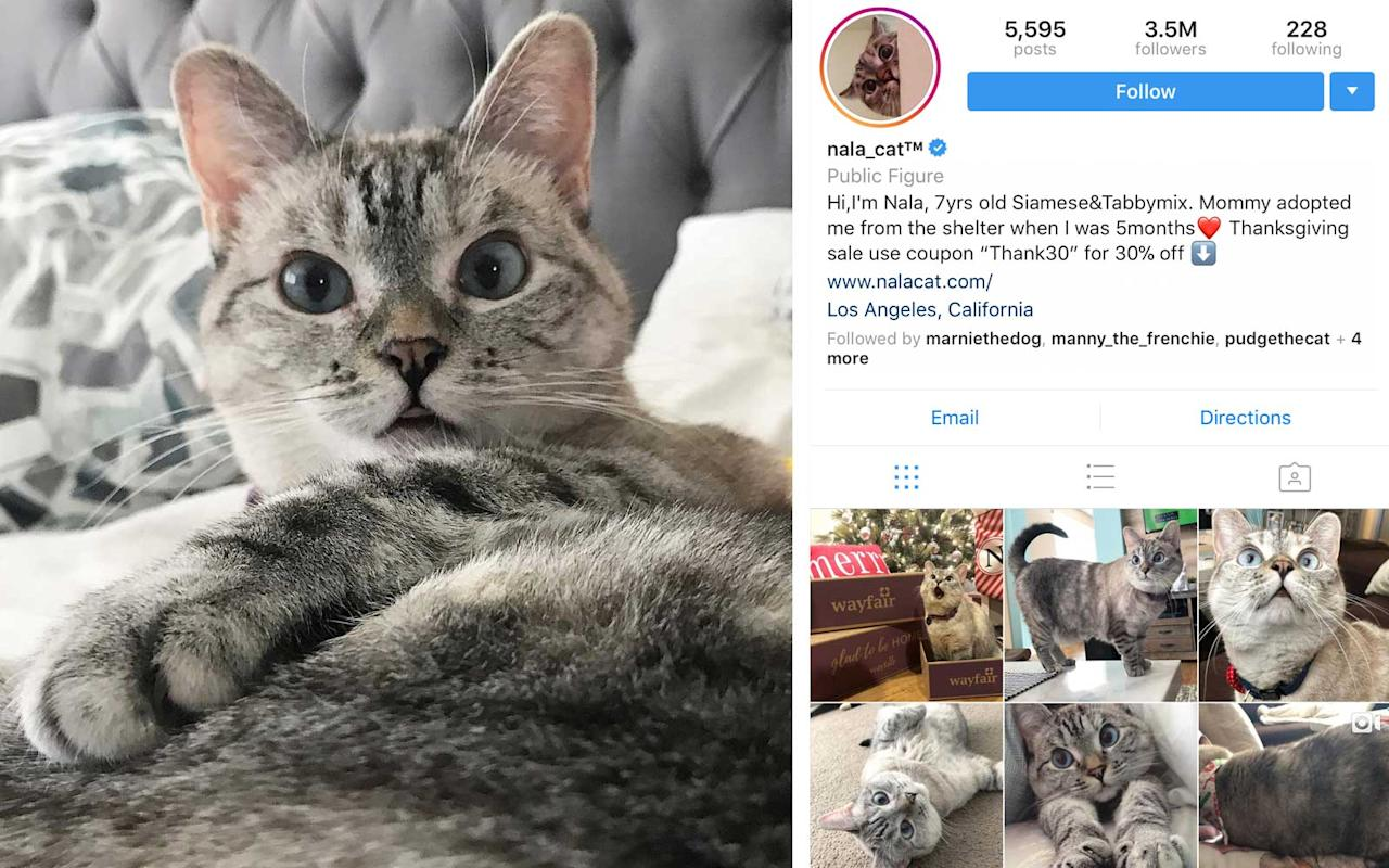 <p>Cat, US - 3.5M Followers</p>