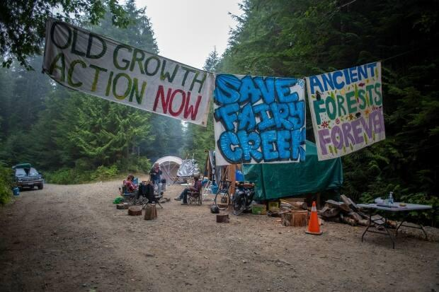 Protesters sit at a blockade in the Fairy Creek area of Vancouver Island. (Kieran Oudshoorn/CBC - image credit)
