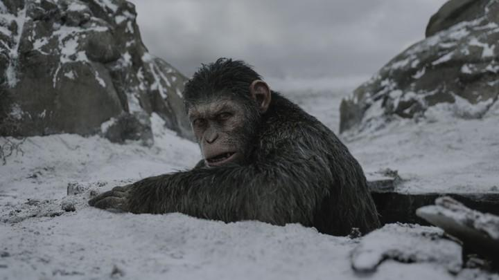 War For The Planet Of The Apes (Credit: Fox)