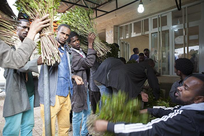 Men carry fresh cut khat for sale at a market in Awaday, Ethiopia, on July 30, 2014 (AFP Photo/Zacharias Abubeker)