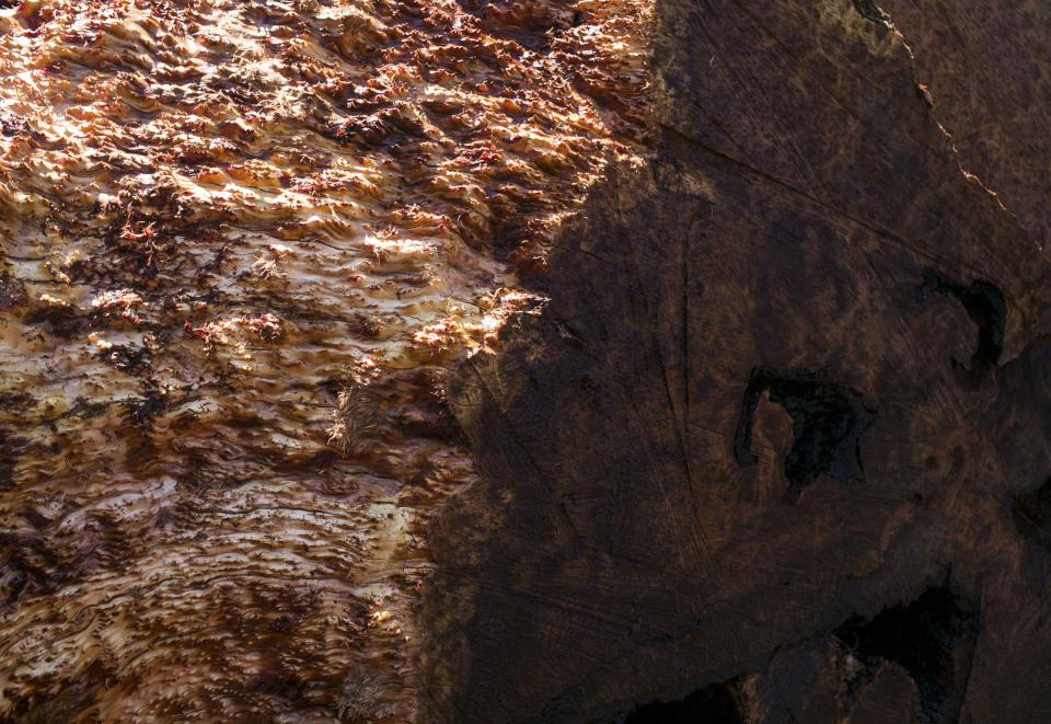 A redwood burl is seen after being pressure-washed at Redwood Burl Inc.'s warehouse in Arcata, California June 13, 2014. The shop procures old cut burls from private landowners. Picture taken June 13, 2014. REUTERS/Nick Adams (UNITED STATES - Tags: ENVIRONMENT BUSINESS)