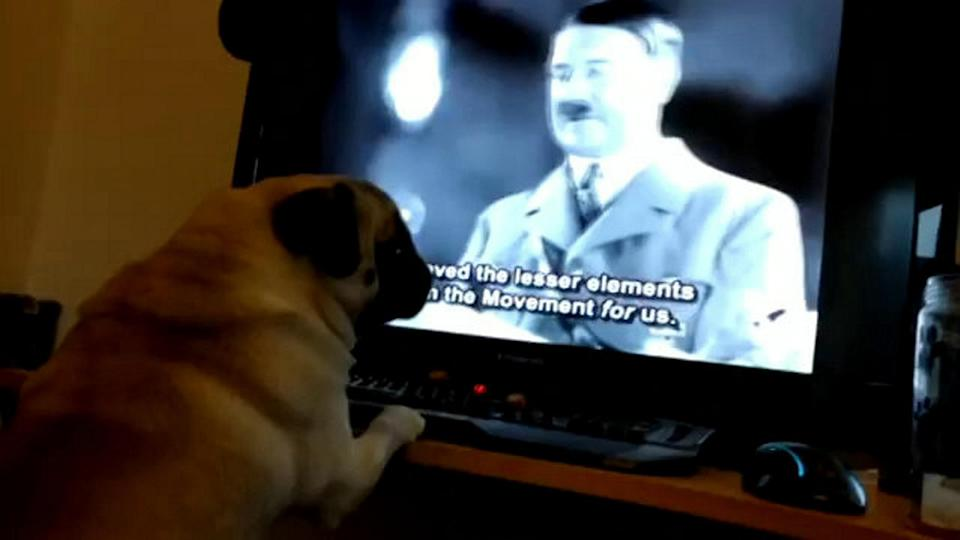 A still from Markus Meechan's video of his girlfriend's dog Buddha (SWNS)