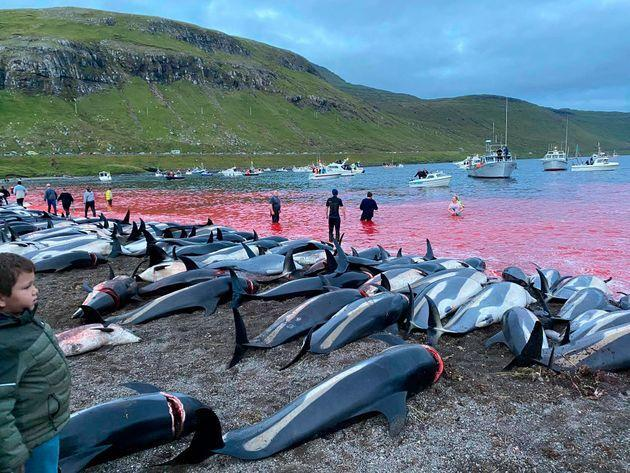 Dead white-sided dolphins lay on a beach after being pulled from the blood-stained water on the island of Eysturoy on Sunday (Photo: via Associated Press)