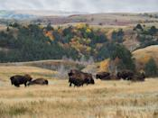 """<p><a href=""""https://www.nps.gov/thro/index.htm"""" rel=""""nofollow noopener"""" target=""""_blank"""" data-ylk=""""slk:Theodore Roosevelt National Park"""" class=""""link rapid-noclick-resp""""><strong>Theodore Roosevelt National Park </strong></a></p><p>President Theodore Roosevelt was a notable supporter of the National Park Service, and spent a lot of time in the Dakota territories as a young man. This experience changed him, and this park filled with wide open spaces and bison, is named in his honor.</p>"""