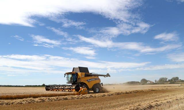 A combine harvester cuts a crop of spring barley in a field