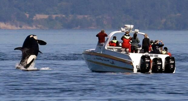 Small tourism operators like whale-watching companies have suffered greatly during the pandemic due to a lack of international visitors. (Elaine Thompson/AP - image credit)