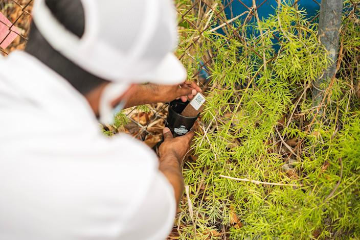 A field worker in the Florida Keys as part of the Florida Keys Mosquito Control District-Oxitec Project.
