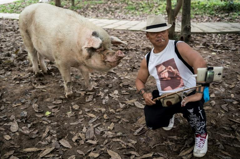 After surviving the quake, the pig became a symbol of the nation's ability to overcome adversity