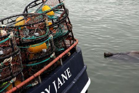 A seal swims up to a fishing vessel loaded with crab pots at Fishermen's Wharf ahead of the opening of the commercial Dungeness crab season, in San Francisco, California, U.S. November 14, 2013. REUTERS/Robert Galbraith/File Photo