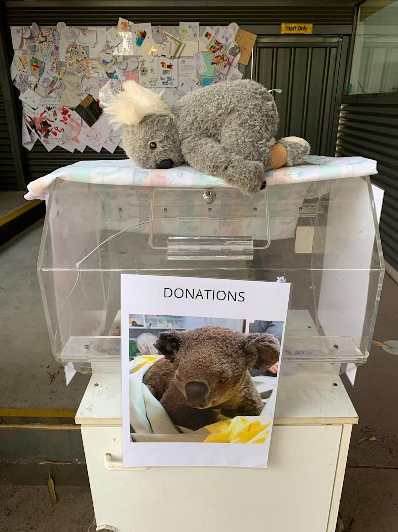 A donation box at the Port Macquarie Koala Hospital where injured koalas are being rescued from bushfires