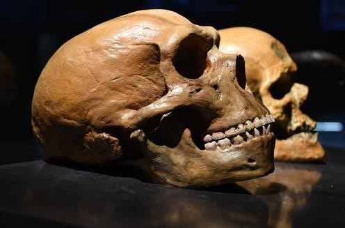 "<span class=""caption"">The brains of humans are subtly different from those of Neanderthals.</span> <span class=""attribution""><a class=""link rapid-noclick-resp"" href=""https://www.shutterstock.com/image-photo/neanderthal-vs-human-skull-470033498"" rel=""nofollow noopener"" target=""_blank"" data-ylk=""slk:Petr Student/Shutterstock"">Petr Student/Shutterstock</a></span>"