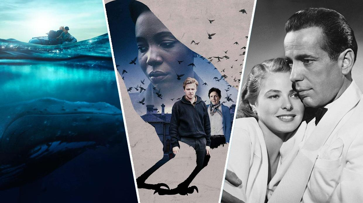 Fathom, Kindred and Casablanca are all streaming this weekend (Apple/Sky Cinema/Getty)