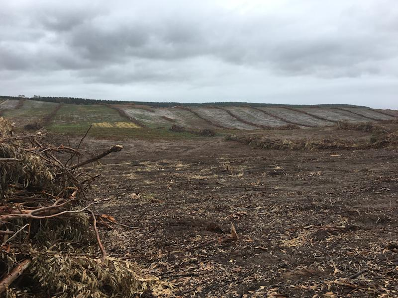 A large logged field against a grey sky in Cape Bridgewater