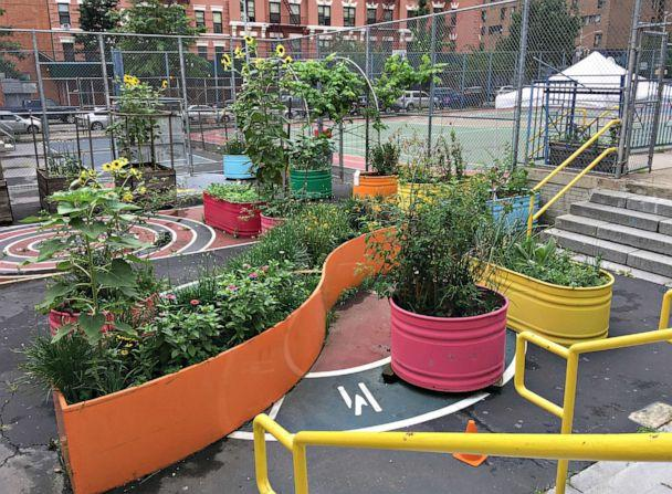 PHOTO: The PS/MS 7 summer garden in East Harlem, New York. The school served as a Regional Enrichment center for children of frontline workers during the coronavirus pandemic this summer. (Courtesy Edible Schoolyard NYC)