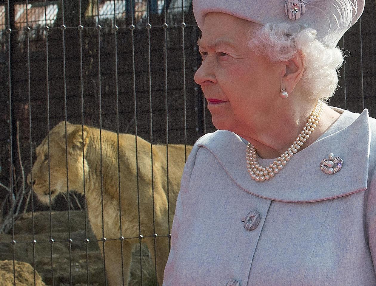 Britain's Queen Elizabeth visits the new Asiatic lion enclosure at London Zoo, March 17, 2016. REUTERS/Arthur Edwards/Pool      TPX IMAGES OF THE DAY