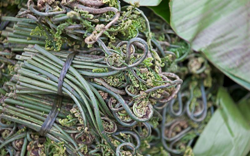 Fiddleheads - Credit: John Warburton-Lee/Alamy