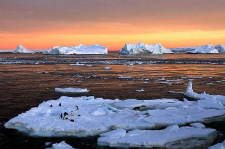 Adelie penguins stand atop ice near the French station at Dumont díUrville in East Antarctica, January 22, 2010. REUTERS/Pauline Askin/File photo