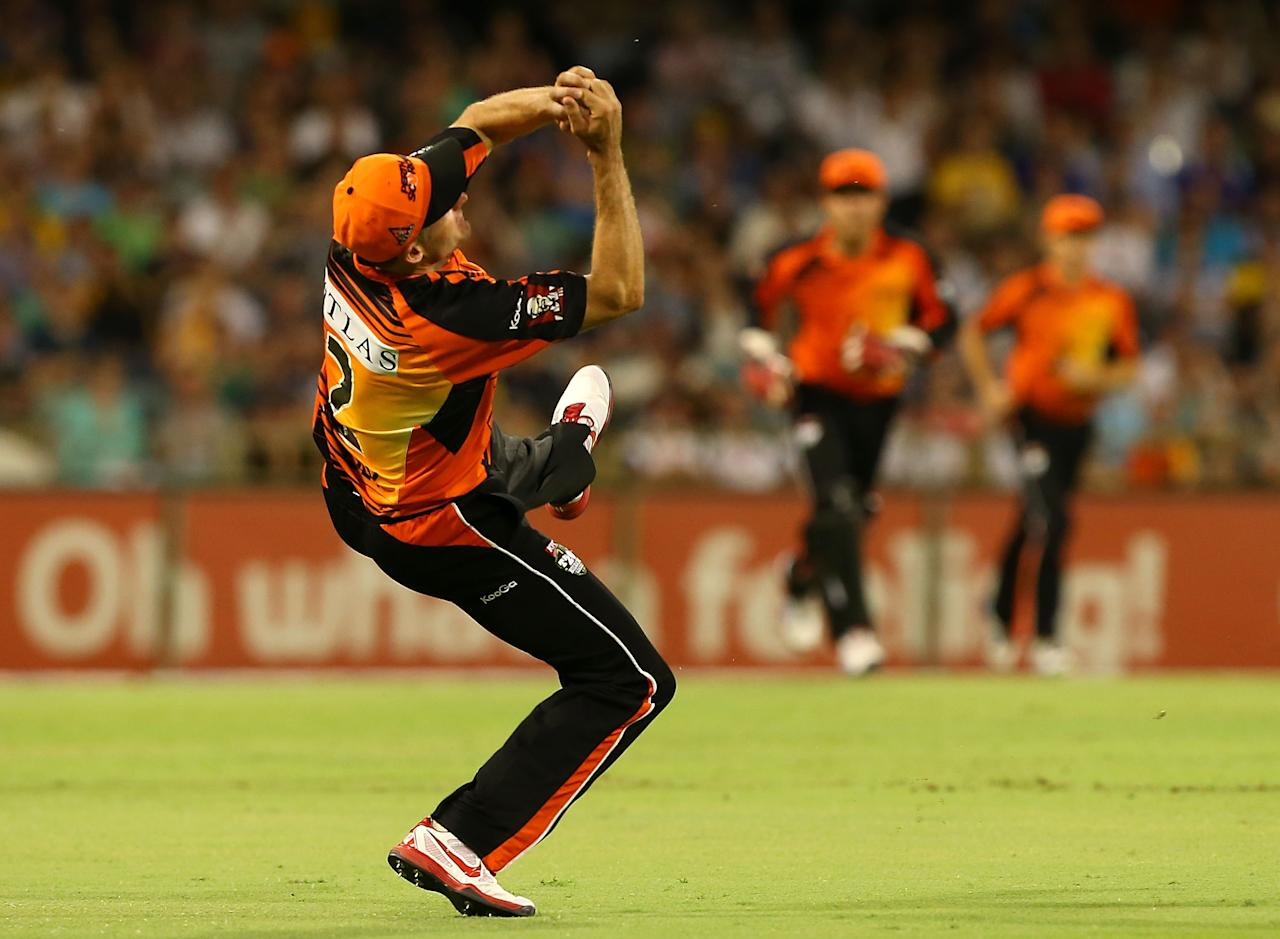 PERTH, AUSTRALIA - DECEMBER 09:  Michael Hussey of the Scorchers catches Michael Klinger of the Strikers during the Big Bash League match between the Perth Scorchers and Adelaide Strikers at WACA on December 9, 2012 in Perth, Australia.  (Photo by Paul Kane/Getty Images)
