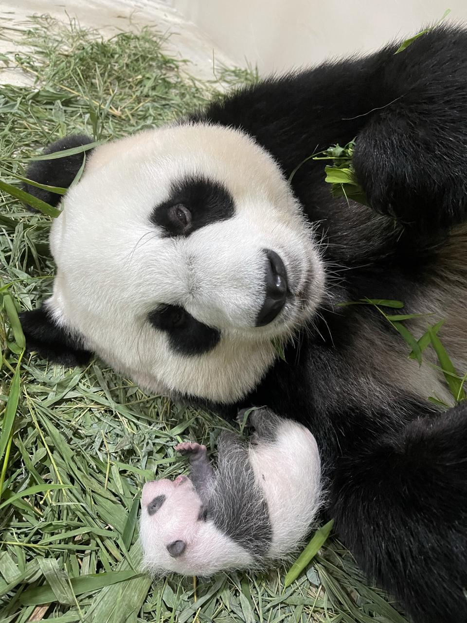 The male panda cub with mother Jia Jia at the River Safari in Singapore. (PHOTO: Wildlife Reserves Singapore)