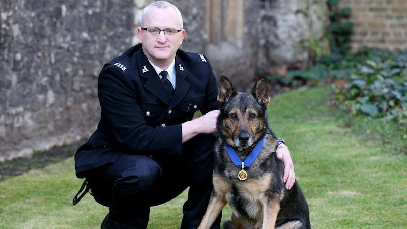 Hero police dog watches in the Commons as MPs back Finn's Law