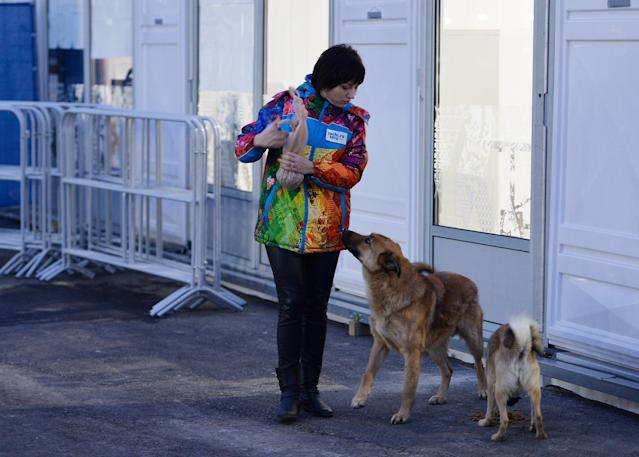SOCHI, RUSSIA - FEBRUARY 05: A volunteer feeds some stray dogs ahead of the Sochi 2014 Winter Olympics on February 5, 2014 in Sochi, Russia. (Photo by Pascal Le Segretain/Getty Images)