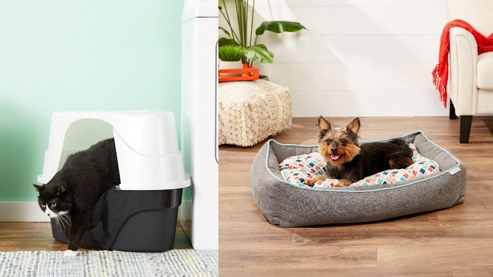 These are all the things you need if you're fostering a dog or cat.