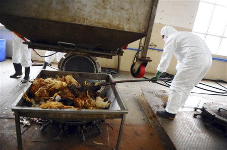Employees dispose uninfected dead birds at a treatment plant as part of preventive measures against the H7N9 bird flu in Guangzhou