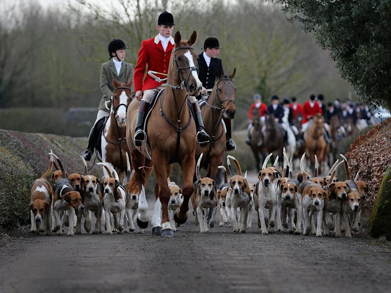 Anti-hunt campaigners claim illegal hunting of foxes has continued, including at large organised Boxing Day hunts (Getty)