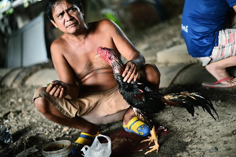 A man cleans his bird in between cock fights at a makeshift ring under a highway in central Bangkok (AFP Photo/Christophe Archambault)
