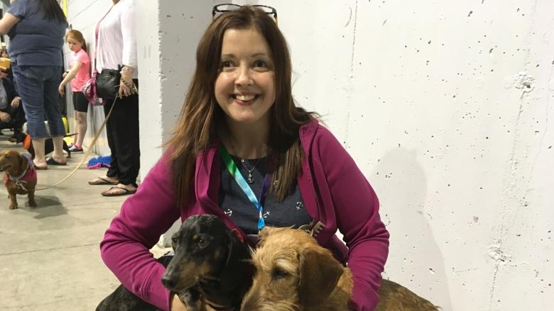 Ready, set, go! Wiener dog races a highlight at N.L. Pet Expo