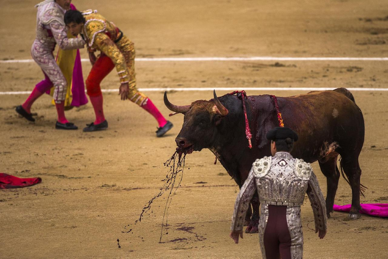 Spanish bullfighter Jimenez Fortes, top second left, kills a Los Chospes ranch fighting bull after being tossed by the bull during a bullfight at Las Ventas bullring in Madrid, Spain, Tuesday, May 20, 2014. Bullfighting is a traditional spectacle in Spain and the season runs from March to October. (AP Photo/Andres Kudacki)