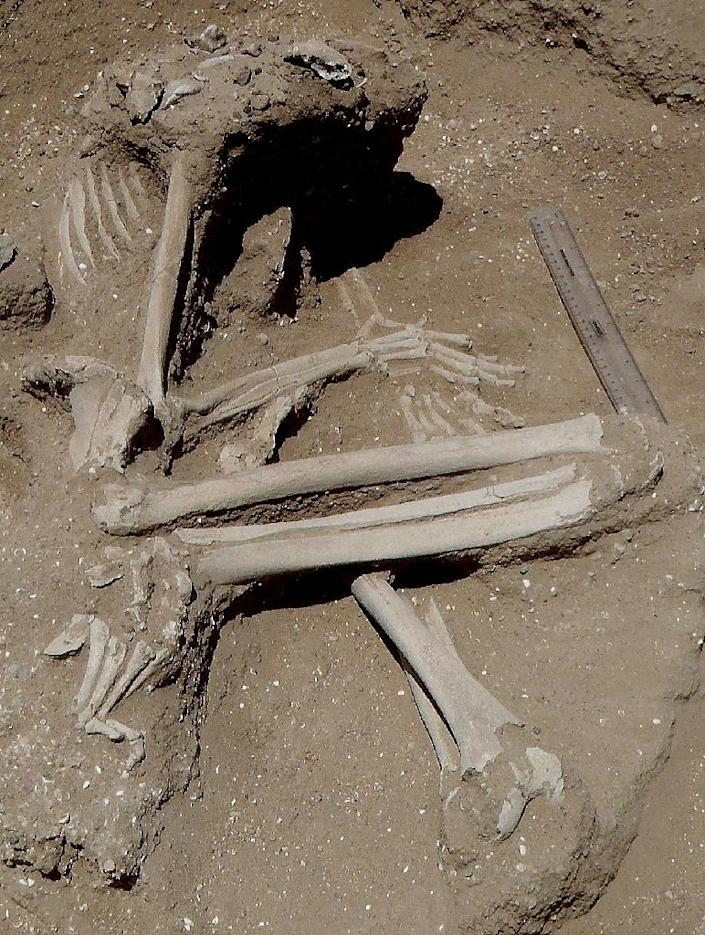 A photo provided by Nature on January 19, 2016 shows a nearly 10,000 year old skeleton after excavation (AFP Photo/Marta Mirazon Lahr)