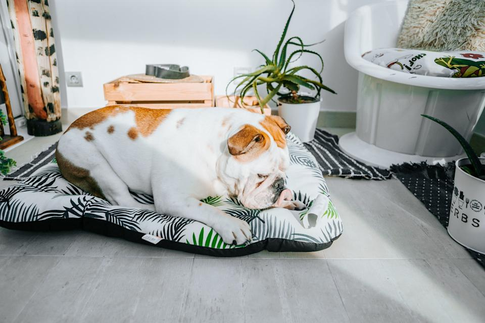 Before you head back to the office, create a safe, comfy place where your pet can have somerelaxing alone time. (Photo: Carol Yepes via Getty Images)